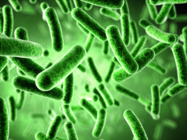 Green microorganisms might be growing in your HVAC system.